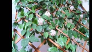 видео Дачный лайфхак: шпалеры и опоры для растений своими руками