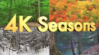The Best Classical Music - 4K Forest Through the 4 Spectacular and Colorful Seasons