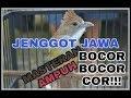 Suara Burung Cucak Jenggot Gacor Untuk Masteran Murai Batu  Mp3 - Mp4 Download