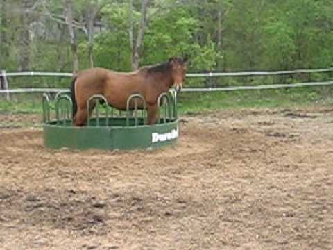 horse of pattern rack saves to at feeders bars feed promote allowing only mesh small the amounts pull panels noble vertical a waste time hay by feeder htm excess pasture