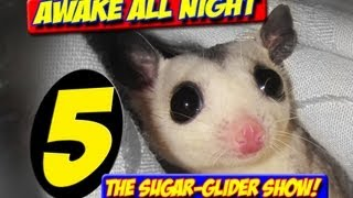 AWAKE ALL NIGHT THE SUGAR GLIDER SHOW EPISODE 5 MARCH 2013 NEW BONDING RESCUE INFORMATION KIDS teens