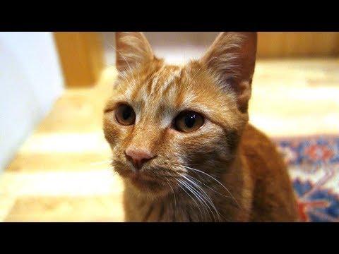 Meet Cute Cat Juno