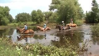 swimming horses!