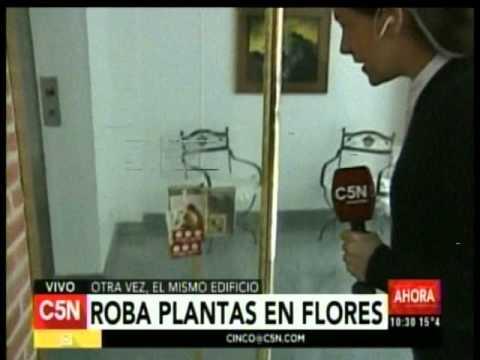 C5N - Sociedad: Roban plantas del cantero y orinan en la puerta de un edificio