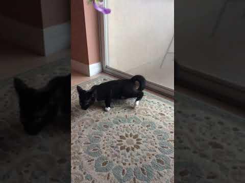 My cats amazing jumping skills