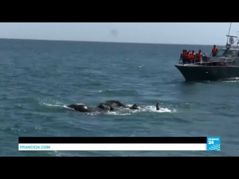 Sri Lanka: Mammoth efforts deployed to rescue two elephants washed out to sea