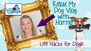 life hacks for your dog