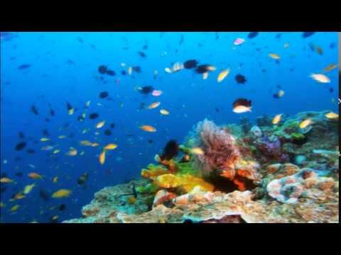 peces en el mar salvaje youtube