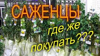 ГДЕ КУПИТЬ САЖЕНЦЫ//НЕЛЁГКИЙ ВЫБОР//МОЯ ЛЮБИМАЯ УСАДЬБА