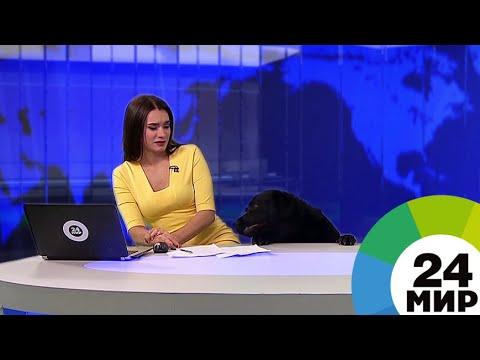 Ролик телеканала «МИР» с собакой попал в мировые телекурьезы года - МИР 24