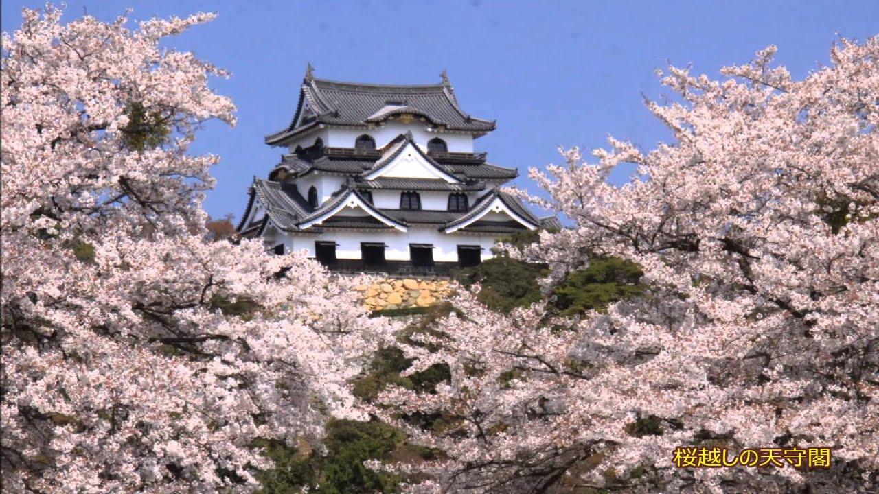 国宝の天守とひこにゃんで有名な彦根城は、滋賀県を代表する桜の名所。彦根城桜まつりの時期にはライトアップも行われ、例年10万人もの多くの花見客が訪れます。さらに、お堀に浮かべた屋形船からのお花見も。ここでは、そんな彦根城の桜についてまとめてみました。のサムネイル画像