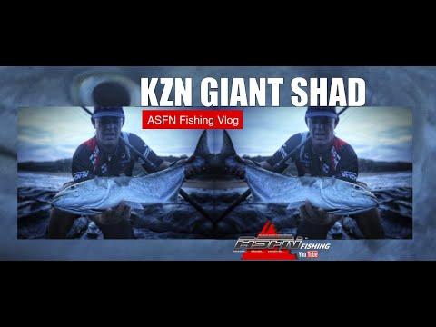 KZN Giant Shad - Fishing