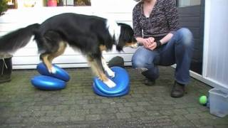 101 Tricks With Balance Discs For Dogs To Improve Body Awareness