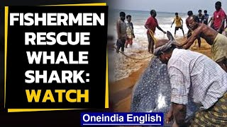 Kerala fishermen save whale shark | OneIndia news