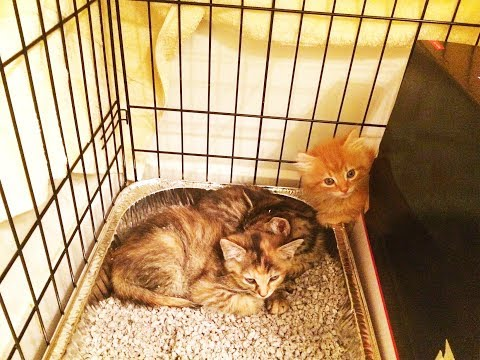 Unsocialized Foster Kittens: first day in foster
