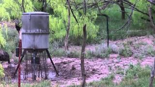 2015 Turkey Bowhunt Crowell, Texas