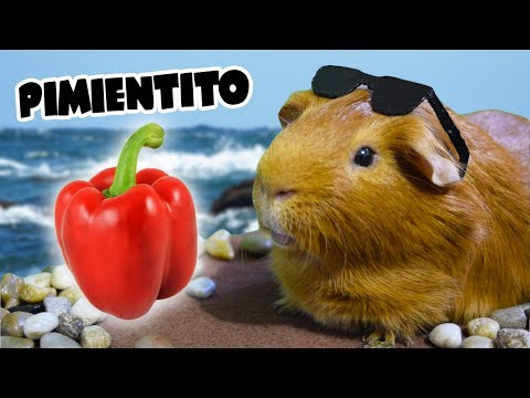"""PIMIENTITO 🎤🐹🍎 Parodia de """"Despacito"""" de Luis Fonsi y Daddy Yankee"""