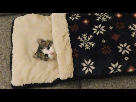 父ちゃんと一緒にテレビを見る子猫