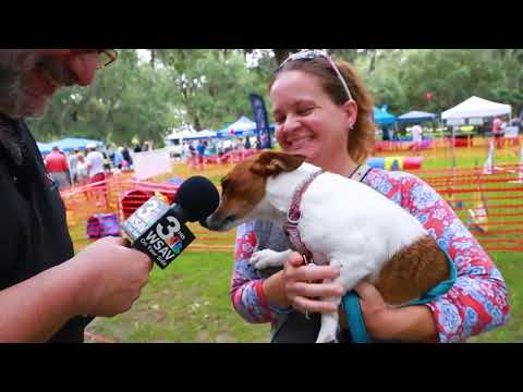 Pet Central - Having fun with dogs and dog owners at Responsible Dog Owners Day