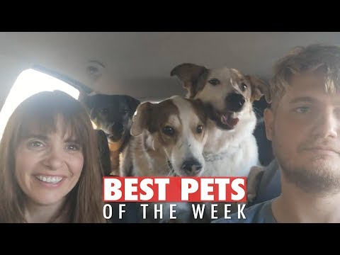 Best Pets of the Week | November 2018 Week 1