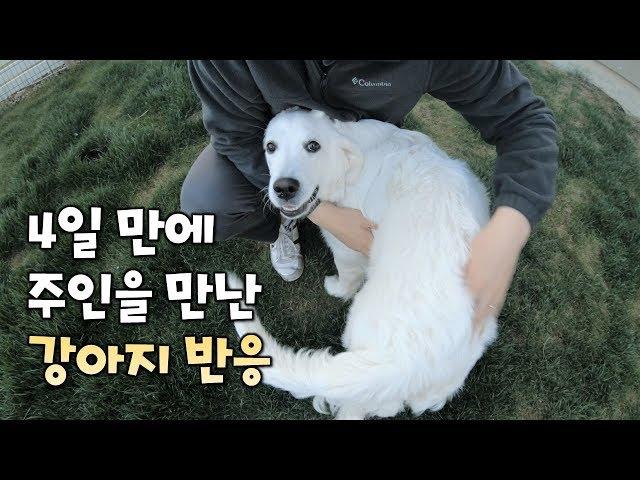 4일 만에 주인을 만난 강아지 반응은?!