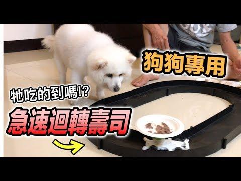 急速迴轉壽司『狗狗專用,牠吃得到嗎?』