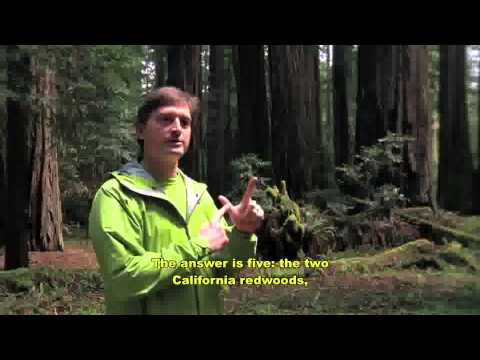 Steve Sillett, PhD. Sequoia/Redwood Canopy Research, Humboldt State