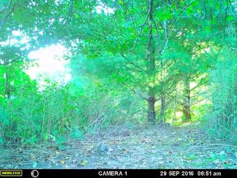 Moultrie A20i Game Camera