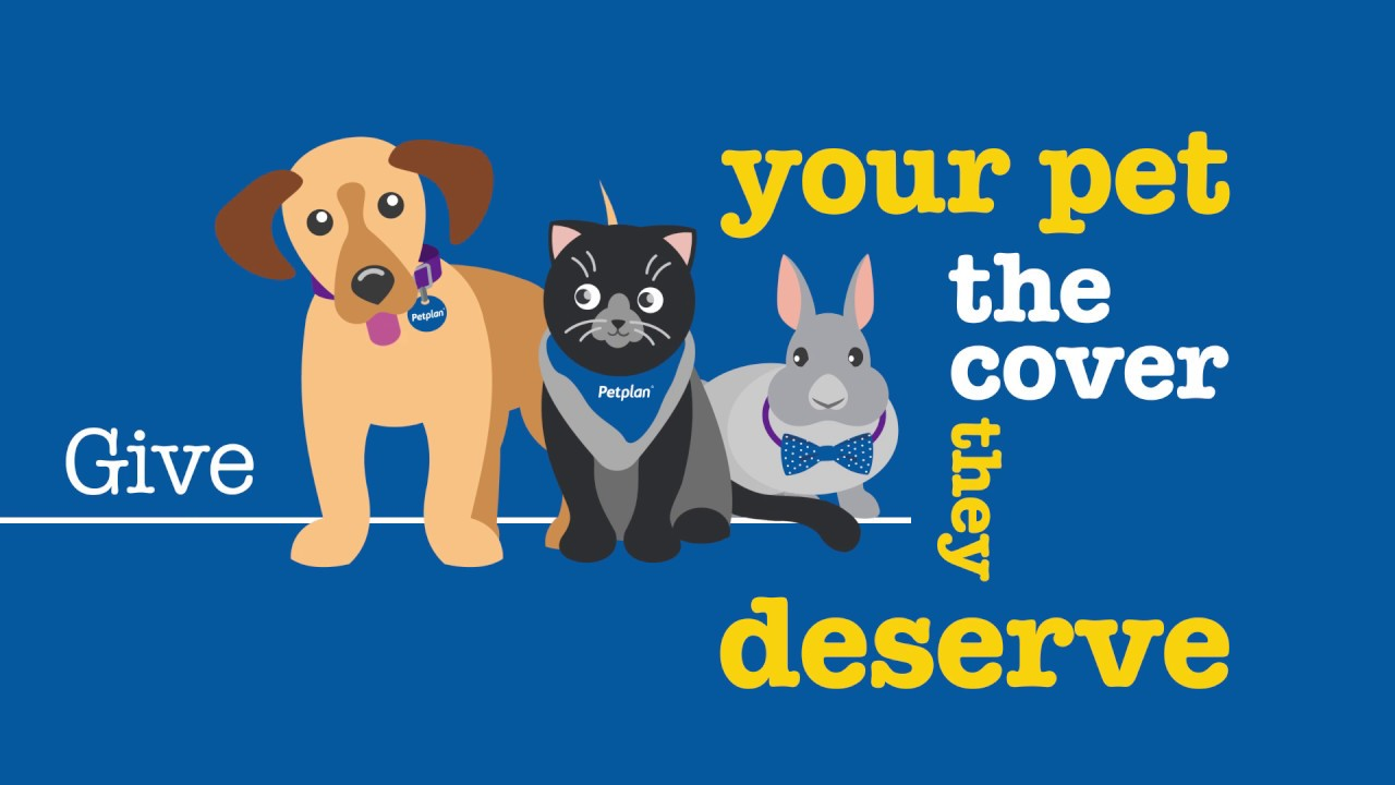 Best Pet Insurance For Dogs Lifetime Cover - PetsWall
