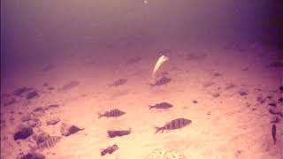 Рыбалка на Ладоге Креницы Подводная съёмка окуня на 5 метрах