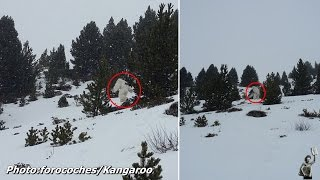 Is this finally proof that the yeti is real?