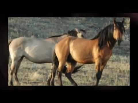 poze cu cai
