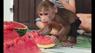 Baby Monkey | Doo And Family Love Watermelon