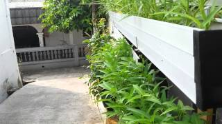 Video Berkebun di rumah secara vertikal (2) download MP3, 3GP, MP4, WEBM, AVI, FLV Juni 2018