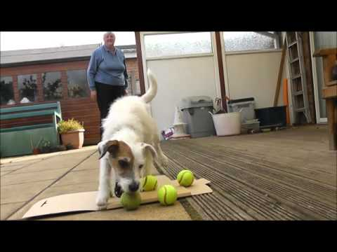 Do More With Your Dog -Trick Dog Champion Title Submission