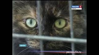 Более 80 спасенных бездомных кошек и собак в Пензе могут снова оказаться на улице