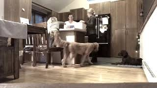 Albany Dog Trainers | Delmar Dog Trainers | GSP Place with Distractions