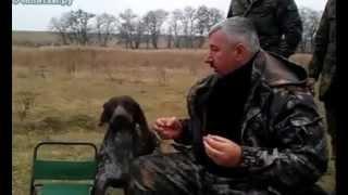 Собака главная подмога на охоте