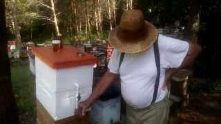 Honey On Tap Flow Hive Fat Bee Man