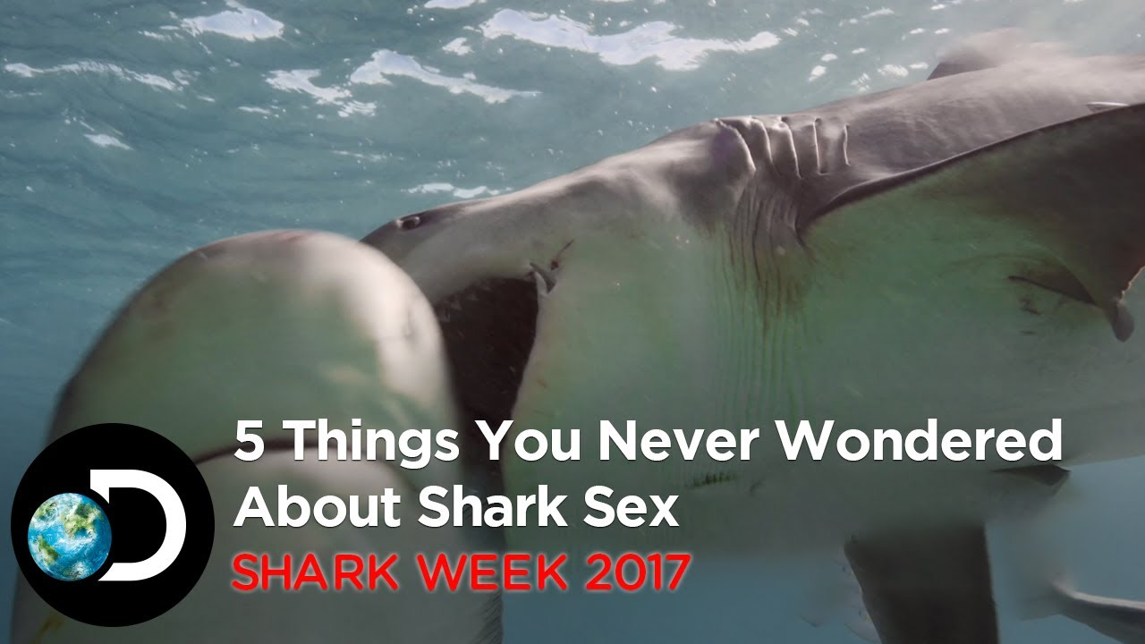 How do sharks have sex