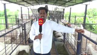 HI-TECH GOAT FARM CHENNAI 9677555333