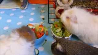 Guinea Pig Diet: Fruits and Vegetables Made Easy!