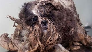 Shocking Dog Transformation - Dog Looks like a Pile of Trash