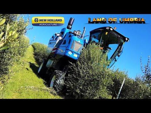 New Holland BRAUD 9090L - Raccolta meccanizzata olive 2017