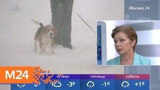 Смотреть видео Когда в столицу вновь вернутся морозы - Москва 24 онлайн