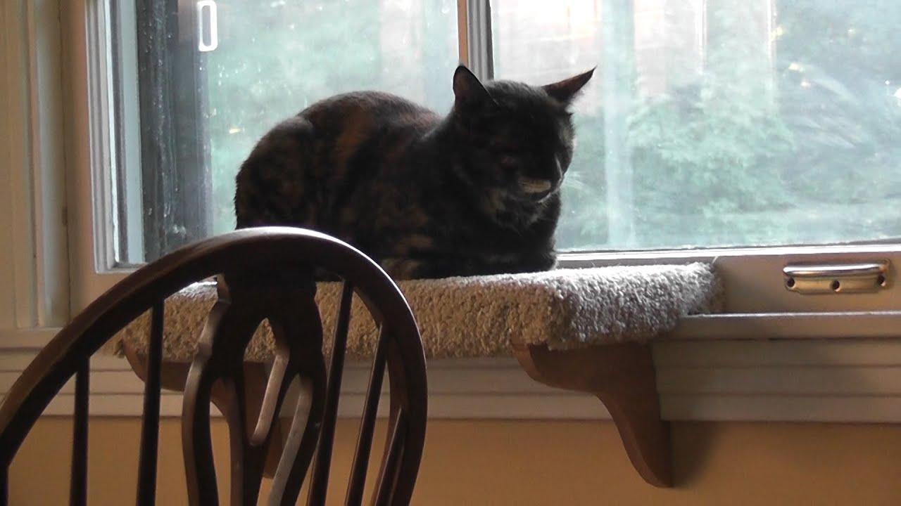Cat Shelf Removable Diy