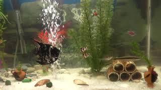 Аквариумные рыбки, видео в хорошем качестве, смотреть онлайн