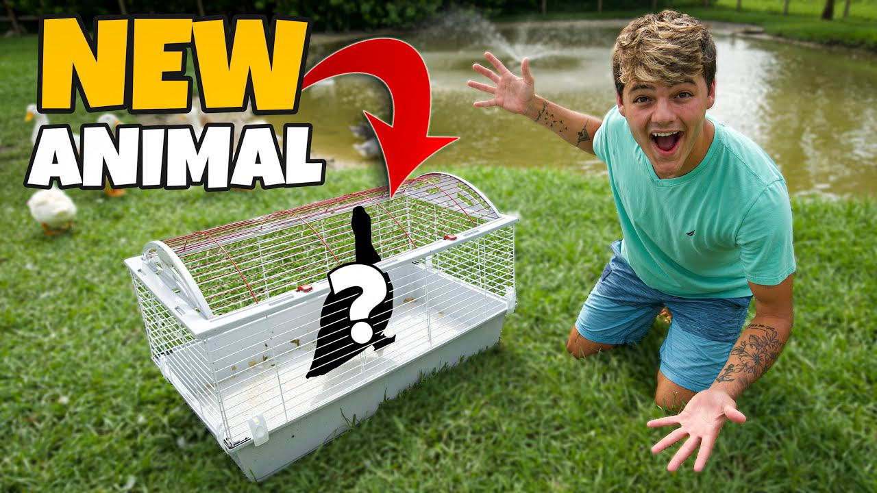 Picking Up My *NEW* FARM ANIMAL!!