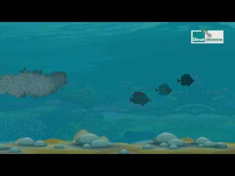 World Water Day : Stop Under Water Pollution- Dilmah Conservation