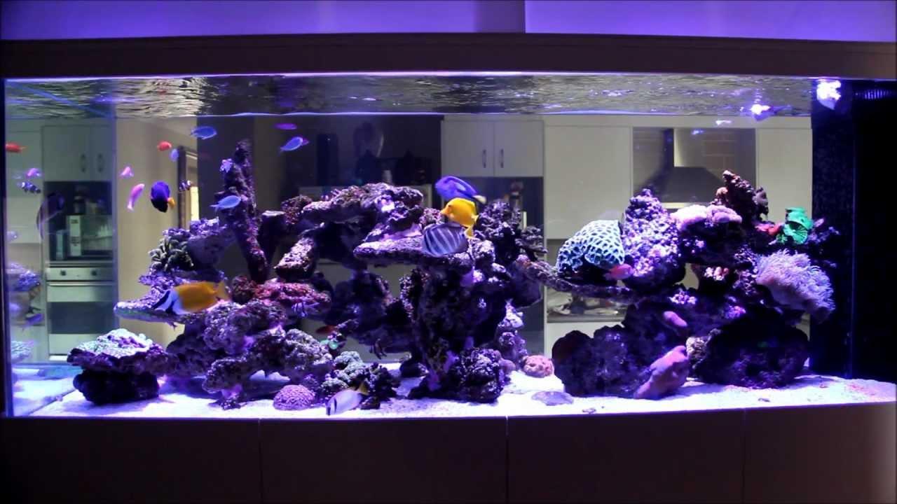 My 1500l 400 Us Gallon Mixed Reef Tank Youtube